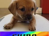Chino is a friendly little baby boy. He likes kids and
