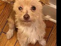 Chip's story Chip is a 7 month old Cairn terrier mix.