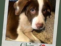 CHIP's story Chip is a sweet & fun puppy who is quite a
