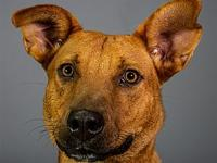 My story My name is Chip. I'm a 37 lb Male Terrier mix