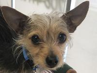 Chipper's story Chipper is a sweet boy who loves to sit