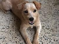 "Chiquita's story Chiquita is a ""Sato"", a stray from the"