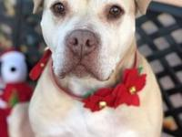 Chispa's story November is Adopt a Senior Pet Month,