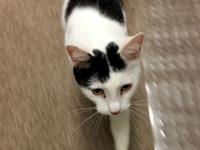 Meet Chivas... a very sweet, petite two year old girl