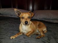 Sancho is a 4 year old Chiweenie who came to Little