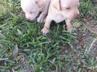 I have 4 female young puppies. They are 6 weeks old and
