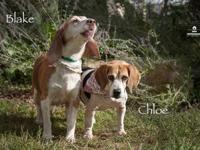 Chloe's story **Our adoption price is 2 for 1 meaning