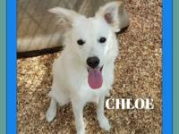 Chloe is a gorgeous 6 month old Border Collie mix pup.