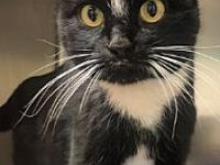 Chloe's story Come meet me at Petco Boulder! Our