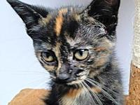 Chloe's story Chloe is a female tortoiseshell kitten,