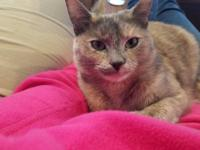 Chloe is a 13 month old dilute tortie, she's current on