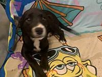 Chloe's story Very sweet and smart puppy! Energetic and