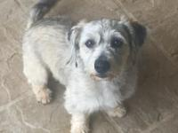 Chloe is an adorable, 2 year old Lhasa/Terrier mix that