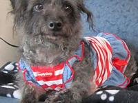 Chloe's story Chloe is a poodle and dachshund mix. She