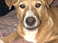 Chloe Puppy - Joyful (SPAYED)'s story I will be