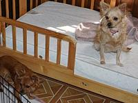 Chloe & Scrappy's story Chloe2 & Scrappy are mother and