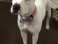 My story Chloe is a super sweet girl that is hearing