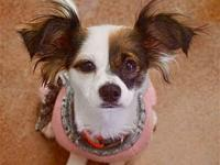 Chloe's story I am a little shy and would prefer a home