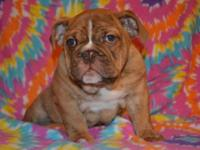 Buttercup is looking for her new home ! She is a
