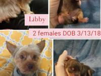 We have 2 female Yorkies available for their forever