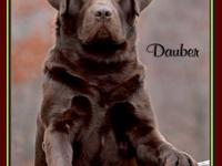 We started breeding labs in 1995 for the love of the