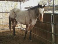 Have two appaloosas, mare and a leopard gelding, one