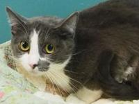 Chole's story Chole was surrendered by her owner who no