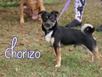 Chorizo is a feisty young guy rescued from Bay County.