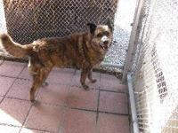 Chow Chow - Prince - Large - Young - Male - Dog