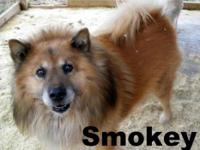 Chow Chow - Raisin - Medium - Senior - Female - Dog