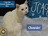 Chowder's story You can fill out an adoption