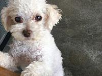 Chowder's story ADOPTION FEE $250 Chowder is a senior