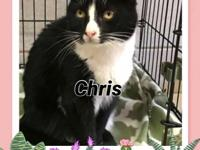 Dear Chris is a 7 year old female kitty waiting for her