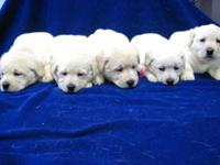 We are delighted to reveal that we had a litter of