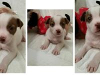 We have some rescued puppies/dogs that require