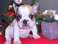 Absolutely adorable, beautiful puppies that you will
