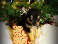 We have Adorable Pomchi Puppies ready on 12/24/2014 We
