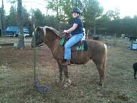 Hafflinger pony for sale. 9 year old mare. Rides like a