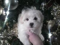 This little lady is a beautiful Christmas gift!!!! She