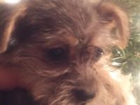 Ready for Christmas the pups are vet checked come with