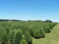 Clarks Christmas Tree Farm is now taking wholesale
