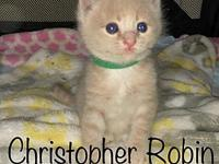 Christopher Robin's story Please fill out our adoption