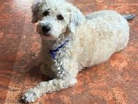 Chrystal's story Chrystal is a sweet little poodle mix