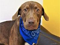 CHUCK's story Meet Chuck. Chuck came to us as a stray,