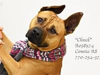 Chuck's story B-16 EXTREMELY URGENT! *Introducing