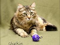 Chuckie's story Chuckie is an extremely handsome boy!