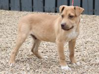 Chucky is a 4 month old hound mix weighing around 20-25