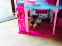 Very playful lovable Chug Puppies, Mom is Chihuahua and