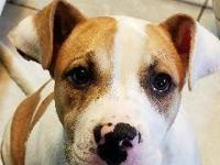4/17/18 VerbantelInterested in adopting this pet? Call