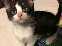 Chunk's story This sweet group of tuxedo wearing